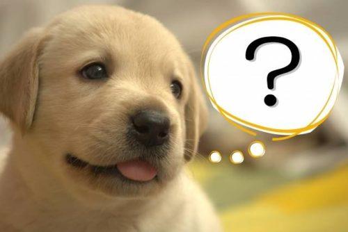 「スリムアップスリムシェイク」ってどんなシェイクなの?